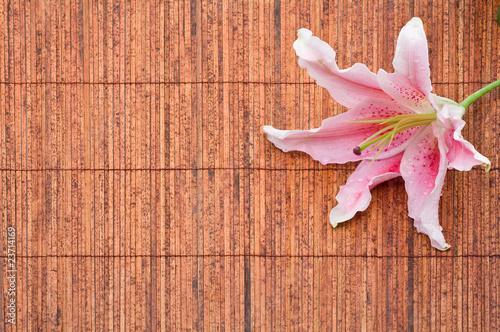Pink stargazer lily (Lilium Stargazer) arrangement Fototapet