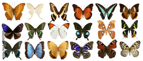 butterflies collection colorful isolated on white