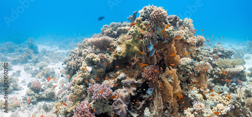 Coral scene with gorgonian coral #24502902