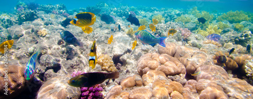 Tropical Coral Reef. Red sea #24641984