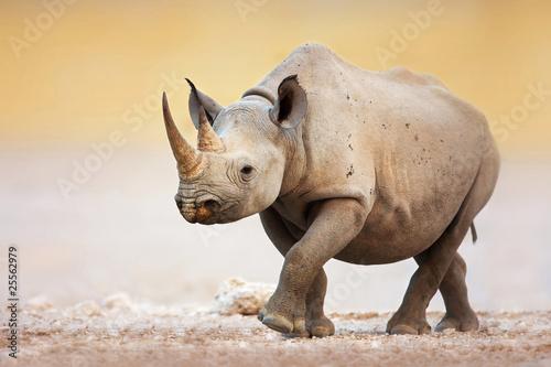 Photo Black Rhinoceros