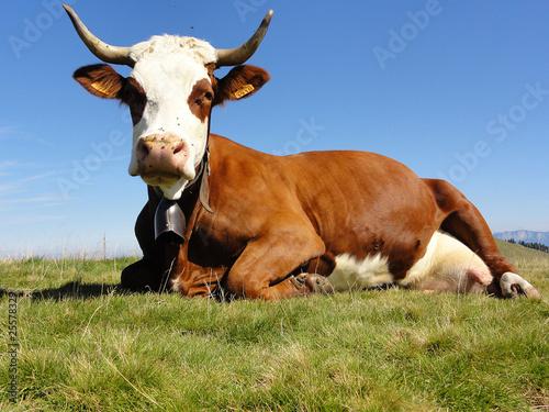 Fotografia, Obraz Vache abondance couchée