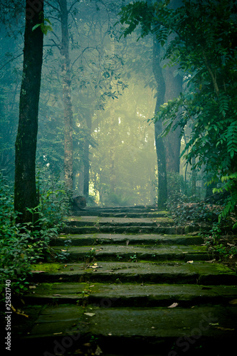 Stone stairs in the forest #25821740