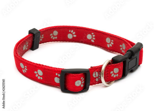 Billede på lærred Dog Collar