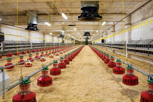 Stampa su Tela poultry farm