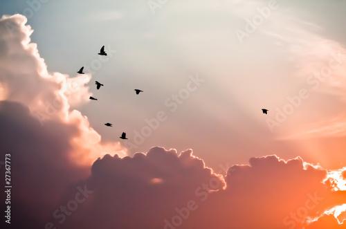 Naklejka premium Ptaki nad chmurami
