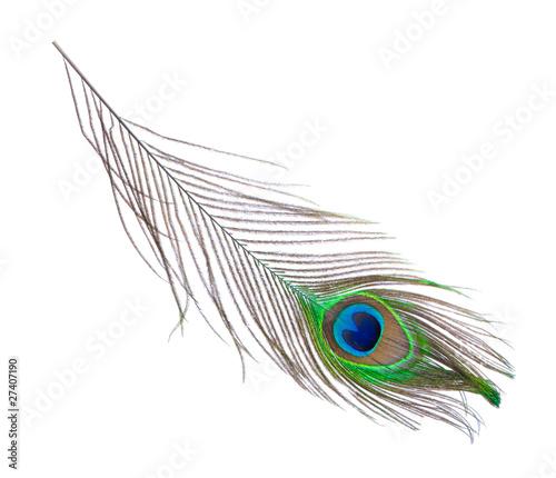 Fotografia peacock plume on white close-up