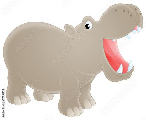 Fotografia, Obraz Hippopotamus