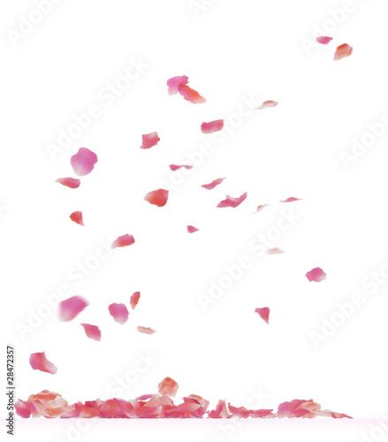 Canvas Print rose petals