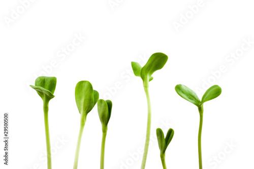 Fényképezés Seedlings