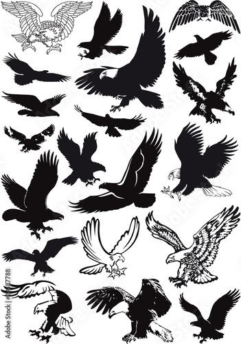 vector eagles collection Fototapeta