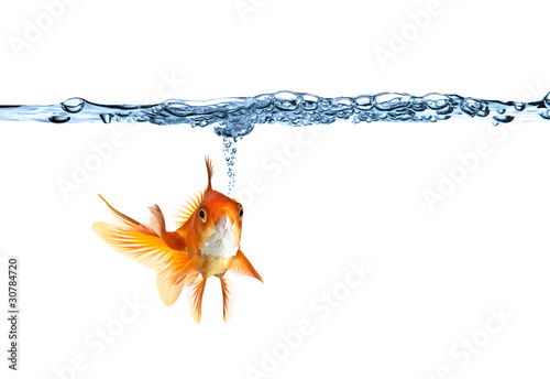 Fotografie, Obraz goldfish making air bubbles