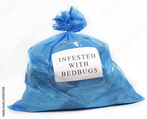 Fotografia Infested with bedbugs