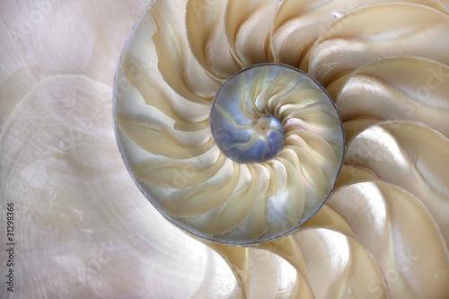 Fotografía Nautilus