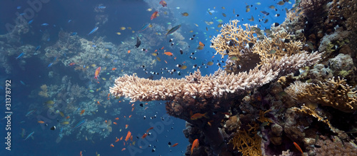 Shoal of fish on the coral reef #31378792