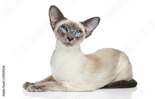 Fotografia Oriental Blue-point siamese cat