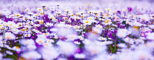 Daisy field #33328142