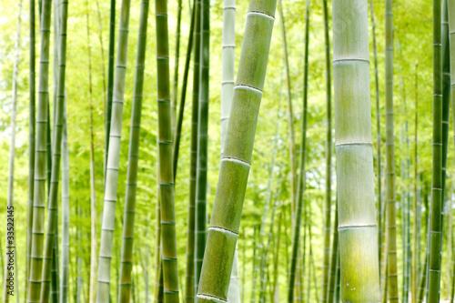Naklejki na drzwi Las bambusowy