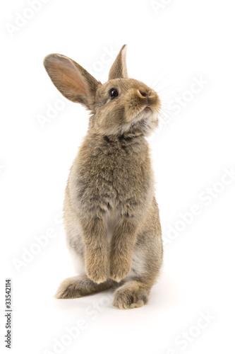 Entzückendes Kaninchen getrennt auf Weiß Fototapete