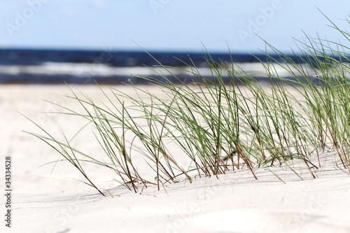 Grass on beach, #34334528