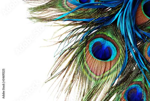 Fototapeta Kolorowe pióro pawia na białym tle XXL