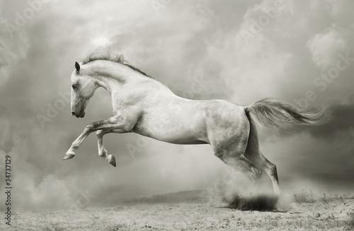 Photo silver-white stallion on black