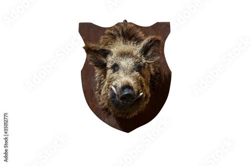 boar head Fototapete