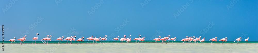 Różowa flamingi panorama <span>plik: #35284999 | autor: BlueOrange Studio</span>