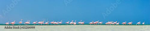 Pink flamingos panorama