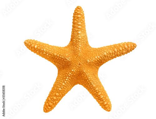 Fotografie, Obraz big yellow sea-star isolated on white background