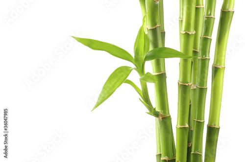 Slika na platnu bamboo