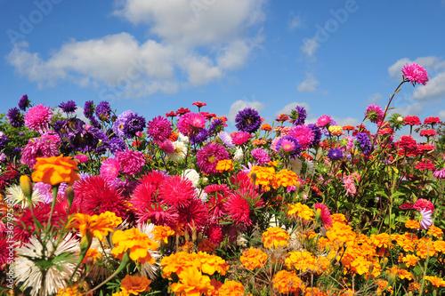 kolorowe letnie kwiaty