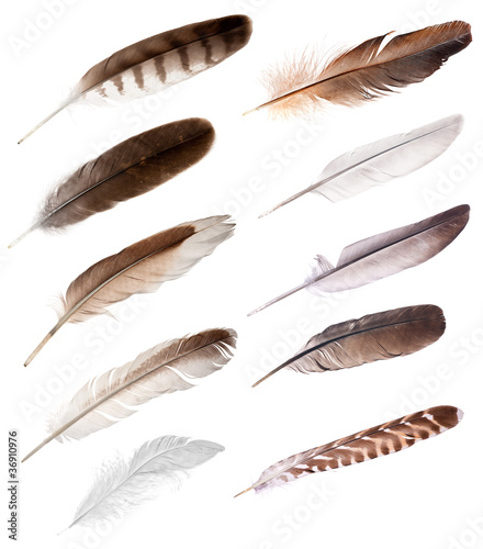 ten feathers from different birds