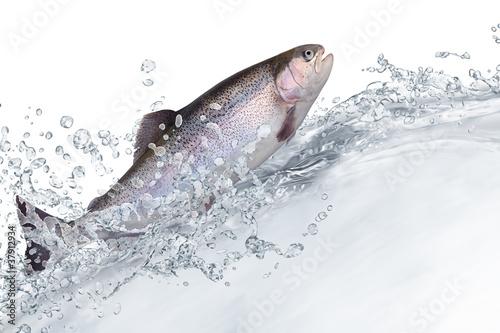 Photographie Fische 131