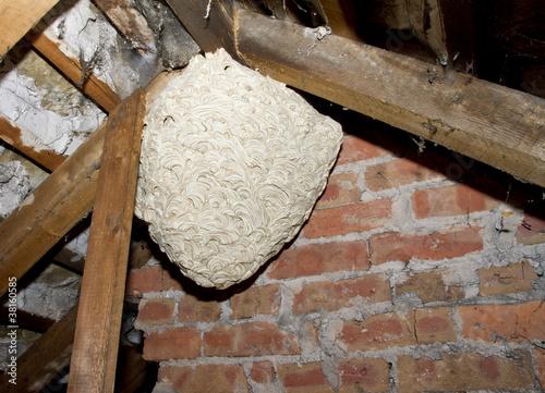 Large wasp nest hanging in dark loft space