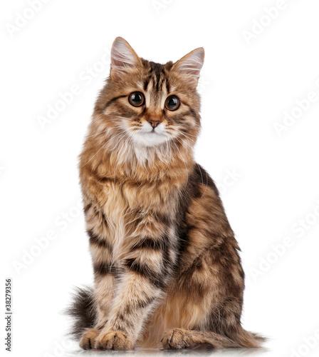 Cute cat #38279356