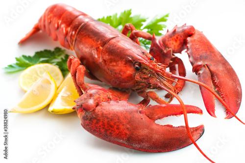 Fototapeta Lobster