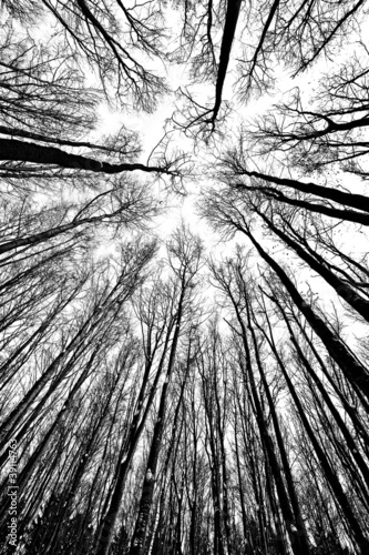 black and white trees silhouettes #39114763