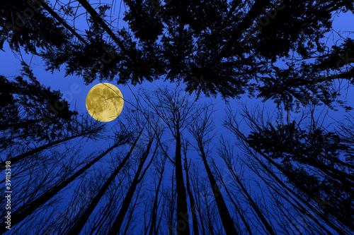 night forest with trees silhouettes on blue night sky