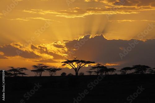 Fototapeta premium Zachód słońca w Afryce z ptakiem perching w