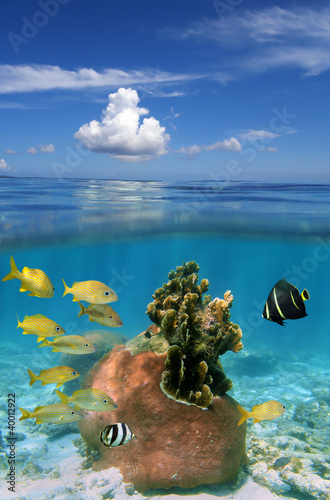 Seascape over and under water surface with cloud and blue sky above waterline and coral with tropical fish underwater, Bahamas