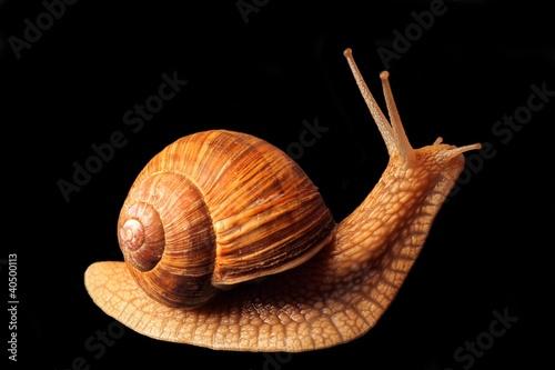 snail lifts its head