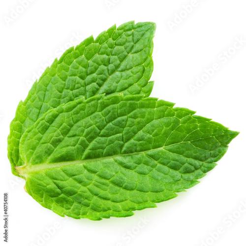 Two fresh mint leaves isolated on white background. Studio macro