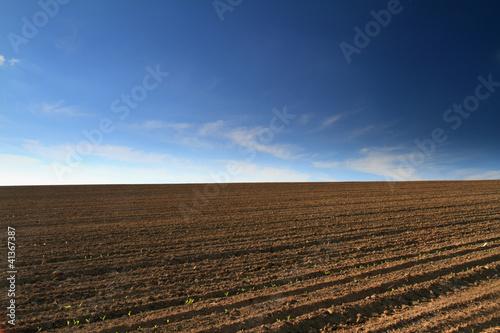 Fotografia Plowed field