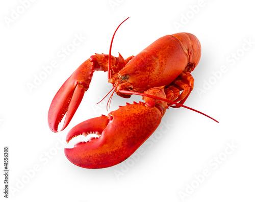 Obraz na plátně Isolated lobster on white