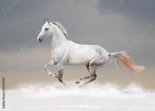Fototapeta white horse in winter field