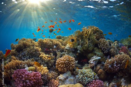 Fotografía Arrecife de coral