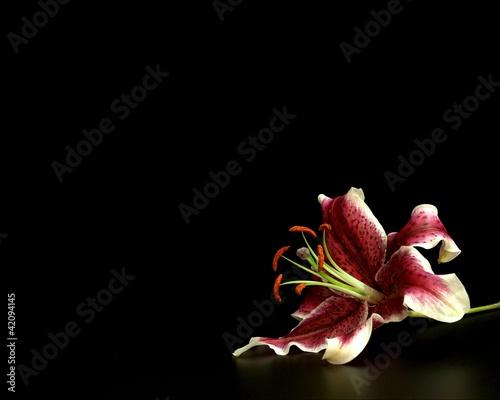 Fotografie, Tablou lilium