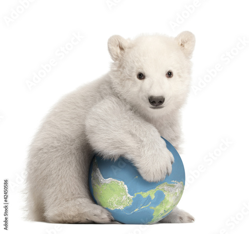 Polar bear cub, Ursus maritimus, 3 months old, with globe