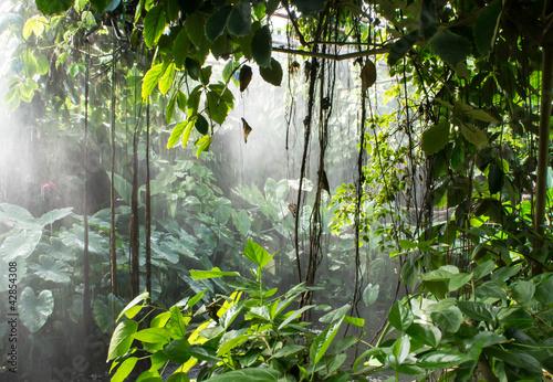 Naklejka na szafę Las deszczowy